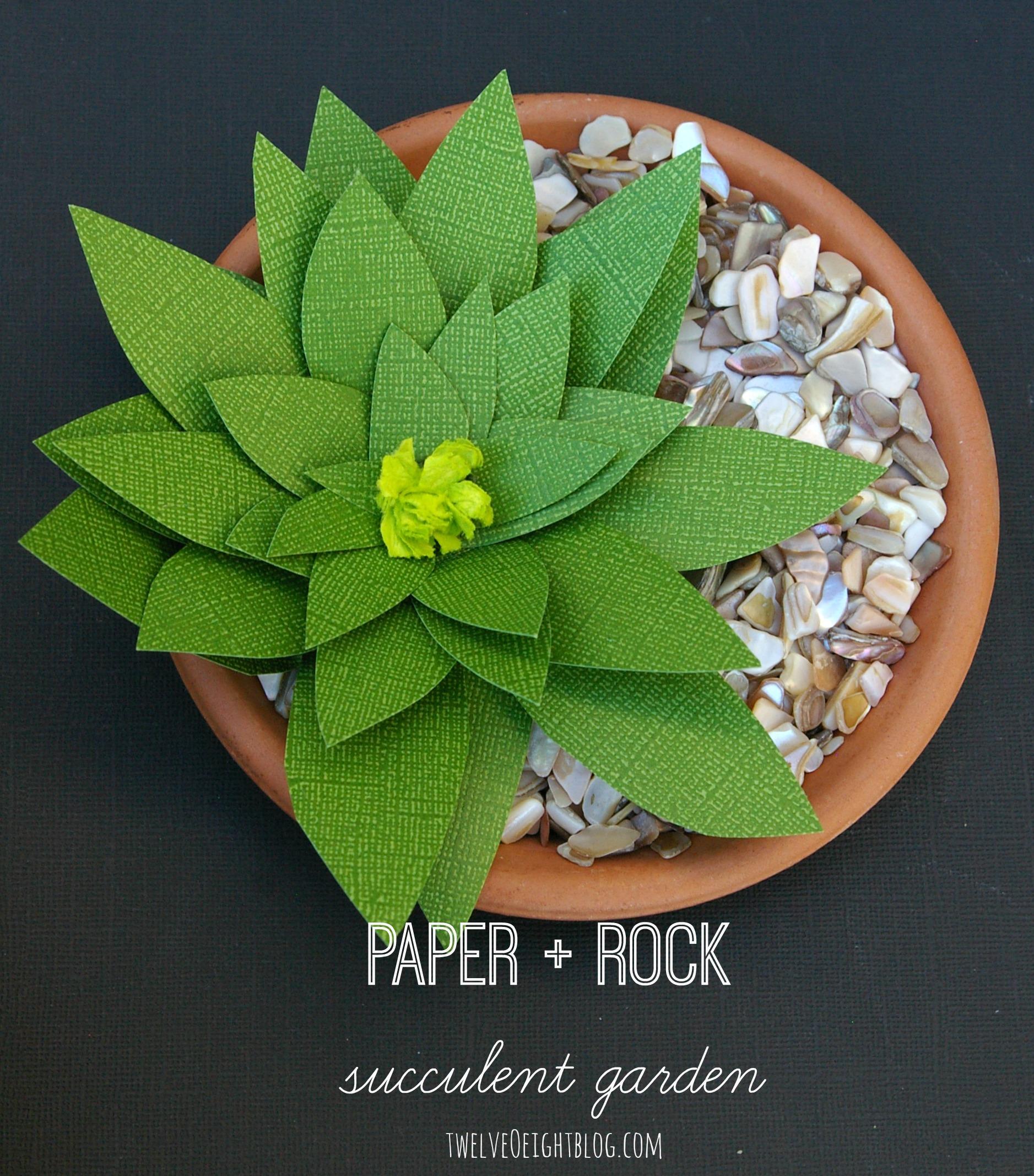 Paper rock succulent garden twelveOeight